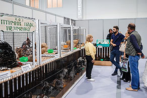 Exhibition 2018. South Russia regional competition of rabbits and poultry